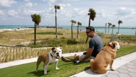 A man sat with two English Bulldogs at South Pointe Park