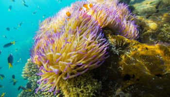 A Night At The Great Barrier Reef: Live Like Dory With Airbnb